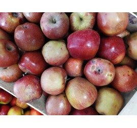 Pommes red delicious (kg)